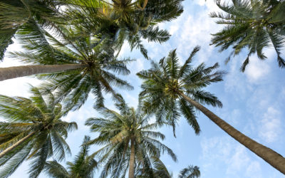 Amerilure Becomes Member of the RSPO